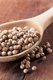 Dry coriander seeds on a spoon Royalty Free Stock Photography