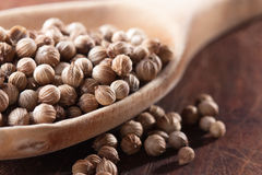 Dry coriander seeds on a spoon Royalty Free Stock Images