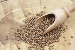 Dry coriander seeds. And wooden spoon Stock Photography