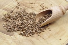 Dry coriander seeds. And wooden spoon Stock Image