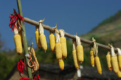 Dry corn. A beautiful  Chinese village, autumn, people dry their food Royalty Free Stock Image