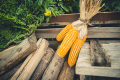 Dry corn cob on wooden with pyre Stock Photo