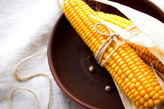 Dry corn cobs in a bowl Royalty Free Stock Images