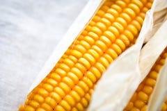 Dry corn cobs Stock Photography