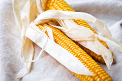 Dry corn cobs Stock Images