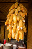 Dry corn cobs hanging Stock Photography