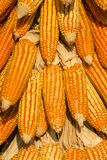 Dry corn cobs Stock Photos