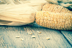 Dry corn cobs Stock Photography