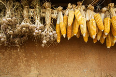 Dry corn and garlic Royalty Free Stock Photography