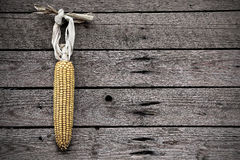 Dry corn Royalty Free Stock Photos