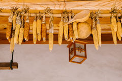 Dry corn hanging on wooden rod Royalty Free Stock Images