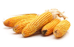 Dry corn Stock Photos