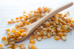 Dry corn seed. Ingredient : Dry corn seed on wood background Stock Photo