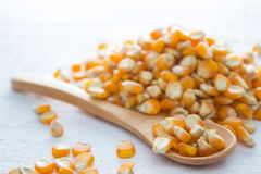 Dry corn seed. Ingredient : Dry corn seed on wood background Stock Image