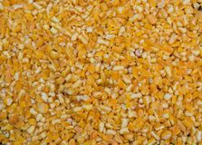 Dry corn seeds as a background. Dry corn seeds are seen as a background Stock Photos