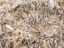 Corn bark background 01 royalty free stock images