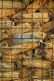 Dry Corn Storage. Close-up of dry corn storage on a Mennonite farm. Ontario, Canada Royalty Free Stock Image