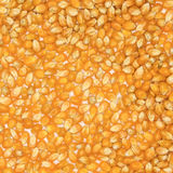 Dry corn Texture Royalty Free Stock Image