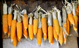 Dry corn on wall Royalty Free Stock Images