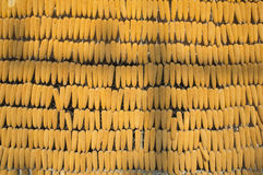 Dry corn on wall Stock Image