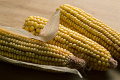 Dry corn Royalty Free Stock Images