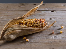 Dry corn Royalty Free Stock Photography