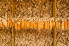 Dry corncob Stock Images