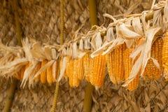 Dry corncob Stock Image