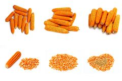 Dry corns set Stock Photo