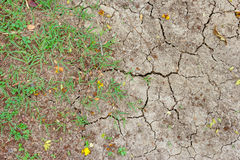 Dry and crack soil with green grass Royalty Free Stock Photos