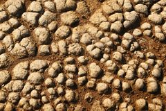 Dry cracked brown stony soil. Stock Photos