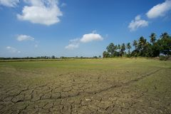 Dry cracked clay of wheat field. Dusty ground with deep cracks, Royalty Free Stock Photos