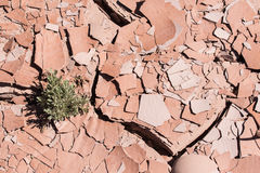 Dry cracked desert ground with plant. Dry cracked desert ground with single green plant coming up stock photo