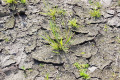 Dry cracked dirt ground with surviving green plant Royalty Free Stock Photo