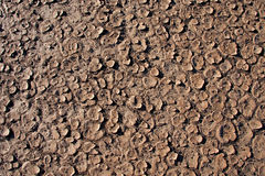 Dry cracked dirt surface. Of verneukpan, a large salt pan in south africa Stock Photography