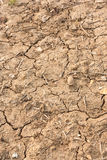 Dry, Cracked Earth. Stock Image