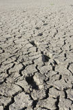Dry cracked earth Royalty Free Stock Photo