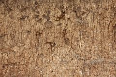 Dry and cracked earth background. Dry and cracked earth texture Royalty Free Stock Image