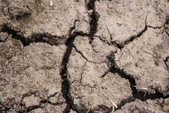 Dry cracked earth a detailed picture of the texture Stock Image