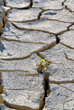Dry Cracked Earth - Drought Royalty Free Stock Images