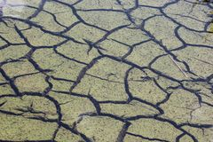 dry cracked earth in Florida wetland royalty free stock images