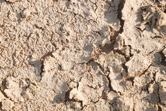 Dry cracked earth. Stock Images