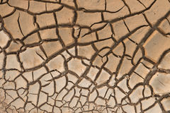 Dry cracked earth. Stock Photography