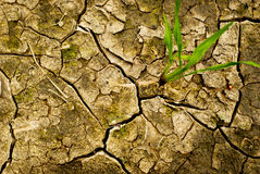 Dry cracked earth. Green plant grows in the dry cracked earth Stock Photography