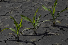 Dry cracked earth with plant struggling for life Stock Photo
