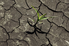 Dry cracked earth with plant struggling for life Stock Images