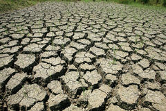 Dry cracked earth with survived grass Royalty Free Stock Photos