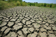 Dry cracked earth with survived grass Stock Image