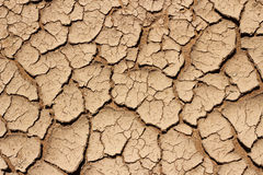 Dry cracked earth texture. On rice field Stock Photo