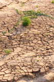 Dry cracked earth , but there is life growing. Royalty Free Stock Photography